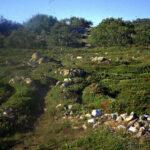 bolshoi zayatski labyrinth