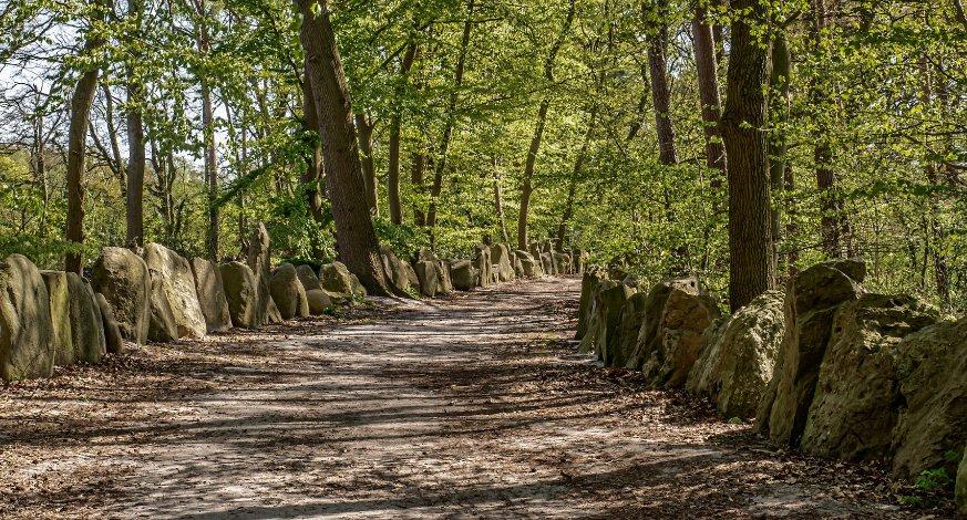 Sachsenhain (Saxon Grove)